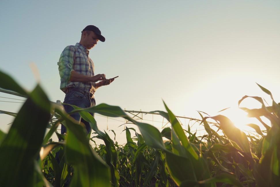 Monitorovanie plodín